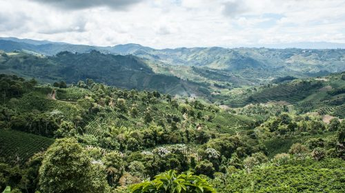 valley in colombia coffee region